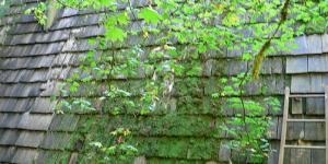 roof_algaes